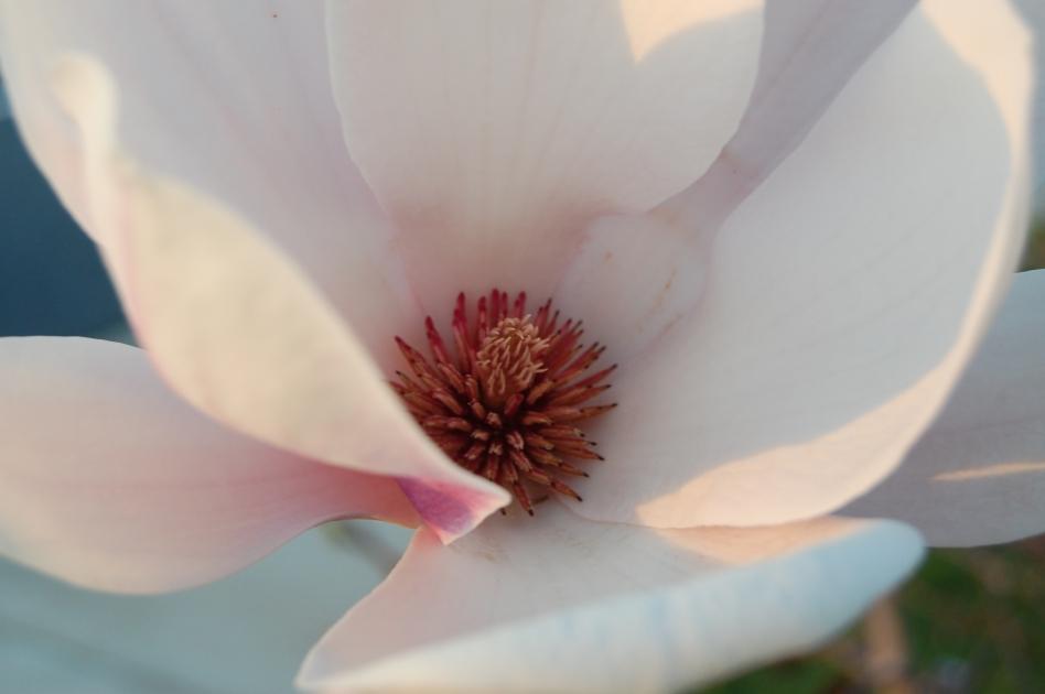hope blooms 025